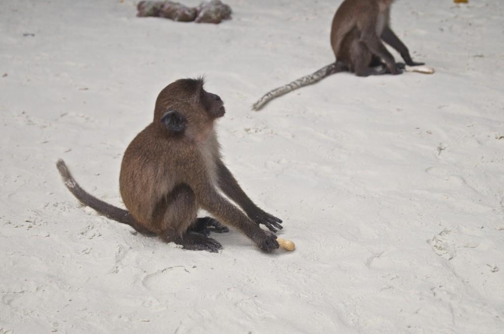 Monkey Island Phuket
