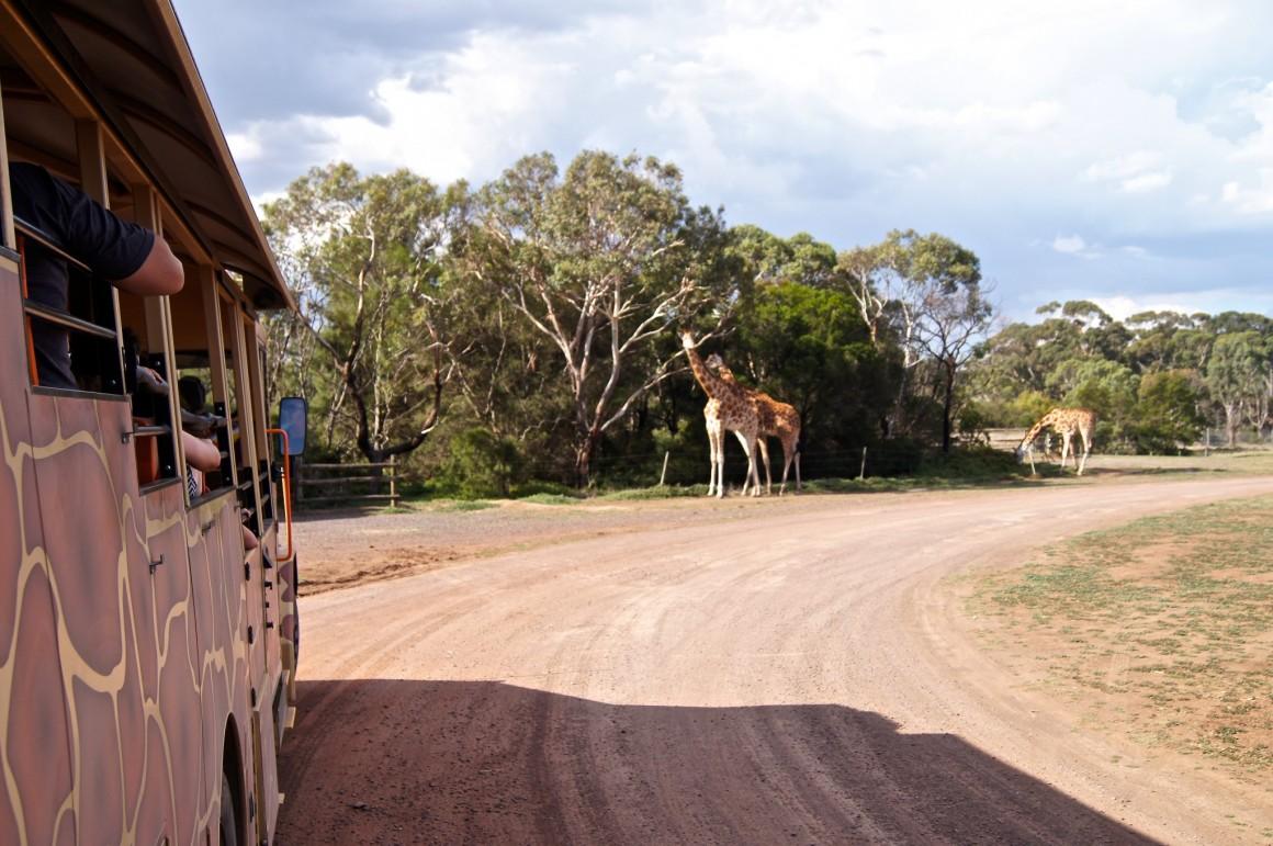 Werribee Open Range Zoo - copyright