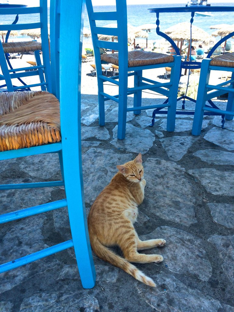 Wandering Kamari Beach Cat ©