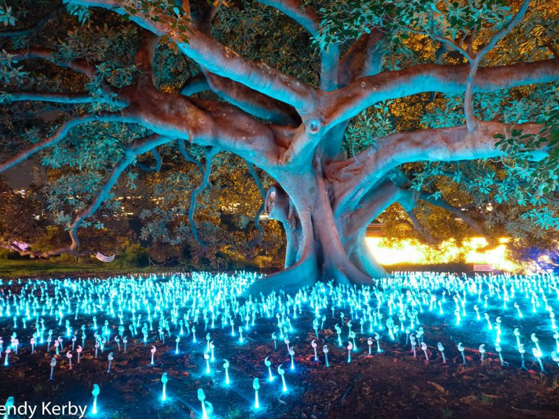 Vivid-Sydney-Botanical-gardens-light-walk