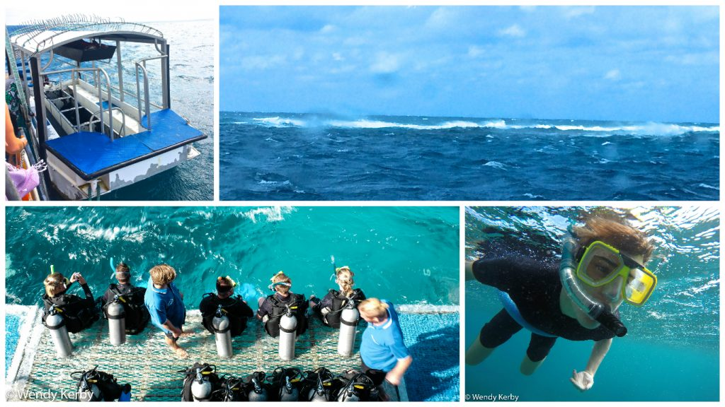 Great+Barrier+Reef+Queensland+snorkeling+Diving+Cairns+Reef+Experience+Boat+Tour
