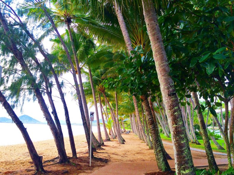 Palm Cove+Palm Cove Beach+ What+is+Palm+Cove+like+What+to+do+in+Palm+Cove