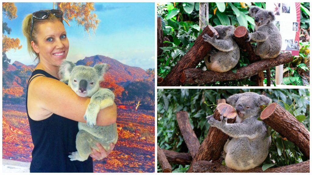 Kuranda+Heritage+scenic+railway+train+rainforest+Queensland+skyrail+Koala+Gardens