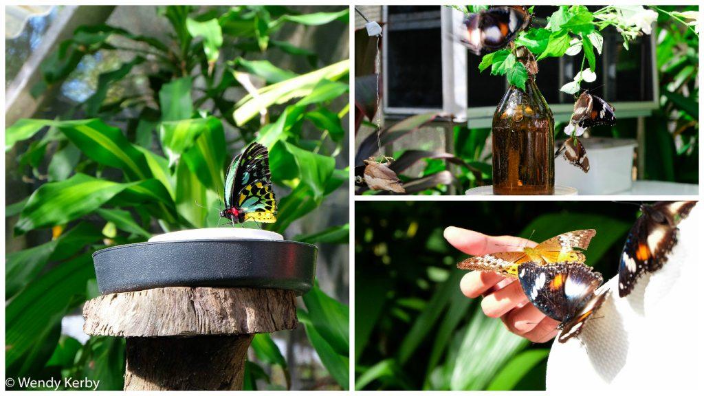 Kuranda+Heritage+scenic+railway+train+rainforest+Queensland+Butterfly+World