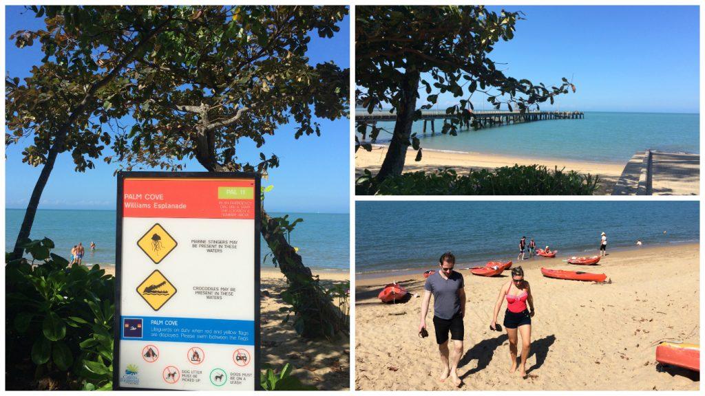 Palm+Cove+swimming+beach+crocodiles+patrolled+net